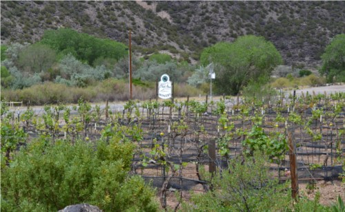 Black Mesa Vineyard