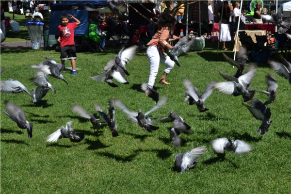 pigeonflap
