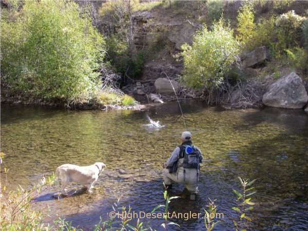 Private Access Stream Fishing New Mexico