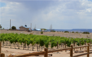 casa abril vineyards pic1