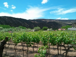 black mesa winery pic2